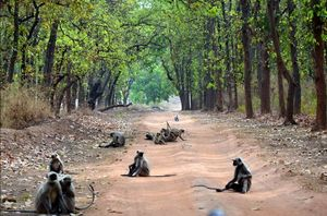 Jungle Book - Visit to forests of Central India