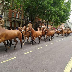Buckingham palace - horse Follow on Instagram - @100countriespassport