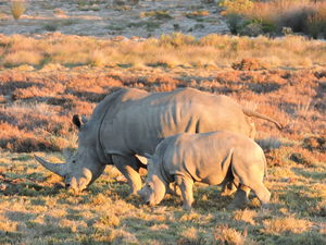 Top 10 Experiences in South Africa