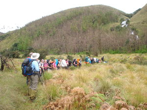 Tea & Wildlife Trails