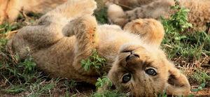 Wildlife Safari : Tanzania