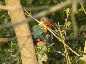 15 min in Nepal, Trip to Dhoodhwa National Park