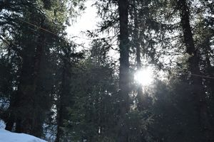 #sunlight #snow #Himachalpradesh #green #kufri
