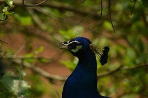 Trivandrum zoo ! A serene place to wander inside Trivandrum city !
