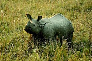 Pobitora Wildlife Sanctuary 1/12 by Tripoto
