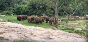 Animal Safari and Zoo at Bangalore