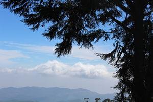 Doddabetta Peak 1/undefined by Tripoto