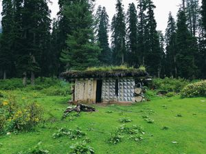 Forest Block Shopian