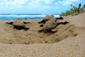 Hikkaduwa Beach 1/undefined by Tripoto