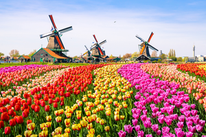 Explore Netherlands in 6 days – Itinerary and expenses guide
