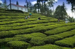 This Offbeat Stay near Darjeeling Is Best Place to Enjoy the Tea Gardens and Hills