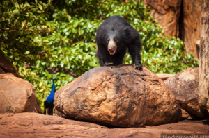 Daroji Sloth Bear Sanctuary 1/undefined by Tripoto