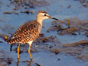 Basai Wetland Is A Bird Sanctuary Hiding Deep In Gurugram's Concrete Jungle And It Needs Your Help