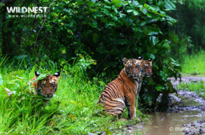 Monsoon Friendly Wildlife Reserves In India To Witness Nature In Its Full Bloom