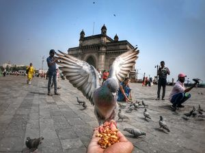 GATEWAY OF INDIA with pigeons