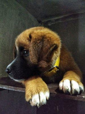 Dogs of Kasol : A photostory