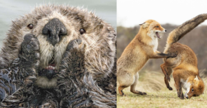 We Can't Stop ROFLing After Seeing The Comedy Wildlife Photography Awards