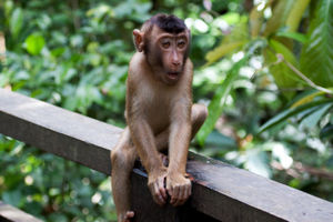 Sepilok Orang Utan Sanctuary (Pusat Pemulihan Orangutan) Sepilok Sandakan Sabah Malaysia 1/undefined by Tripoto
