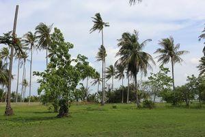 Bamboo Island #colourgreen