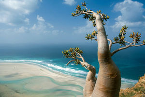 Socotra 1/4 by Tripoto