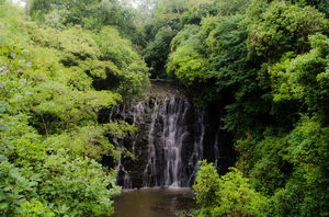 Elephant Falls 1/undefined by Tripoto