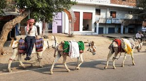 Outskirts of Agra.. street photography..