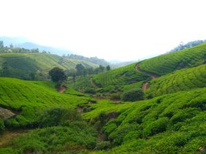 Munnar Simplified - Explore, Experience, EnJOY