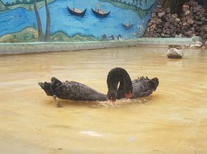 Patna zoo patna