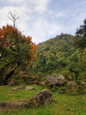 Dzuleke Kohima Nagaland