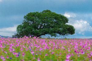 Maharashtra's Paradise of Flowers- Kaas#BucketList2019