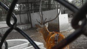 Sayaji Baug Zoo