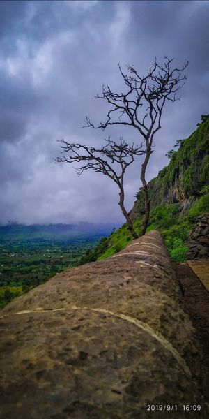 Definition of beauty is ambiguous. lush green background verses tree with no leaf. Lenyadri caves.
