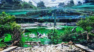 zoo swan