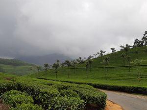 Misty Hills: Munnar