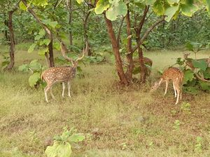 Asiatic lion,Gir jungle and a road trip...what else!!!