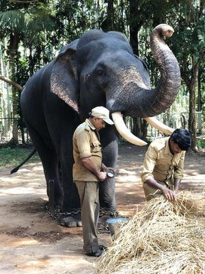 Sakrebailu Elephant Training Camp 1/undefined by Tripoto
