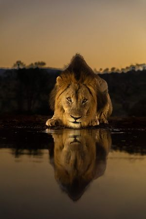The Land of Asiatic lion