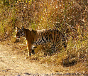 Weekend Getaways: Jim Corbett National Park