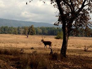 Mowgli's Home, Kanha National Park #LuxuryTripIndia