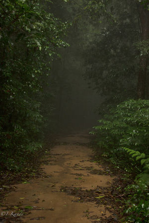 Experiencing rainforest in Agumbe