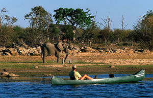 Chobe National Park 1/1 by Tripoto