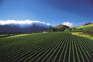 Cape Winelands Home Stays 1/1 by Tripoto