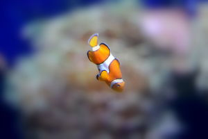 Finally I found NEMO!!!! and he didnt like clicking him :P
