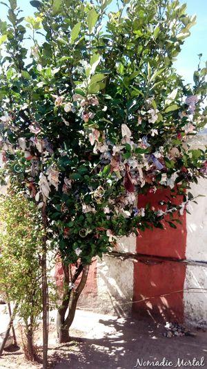 My soul jumped with glee – Himavad Gopalaswamy Betta