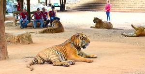 Weekend in Kanchanaburi, Sanctuary for wild animals