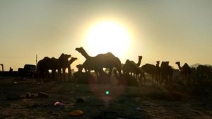 The Best Places to Catch the Sunset in Rajasthan