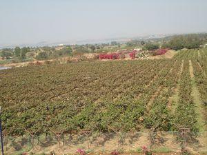 Day trip to Sula wine land
