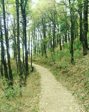 Off the beaten path in Uttarakhand