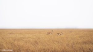 A diary of cute wildlife – velavedar bike ride