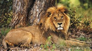 Wildlife Safari: Botswana